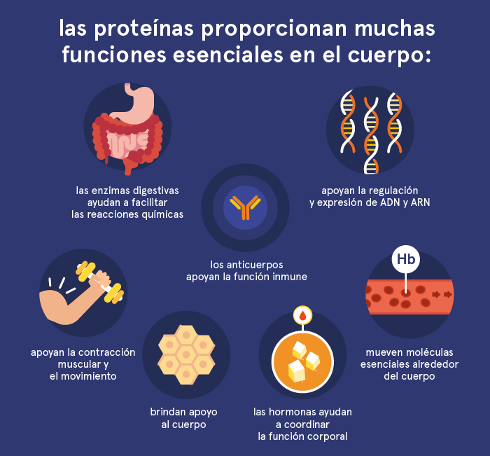 protein functions es